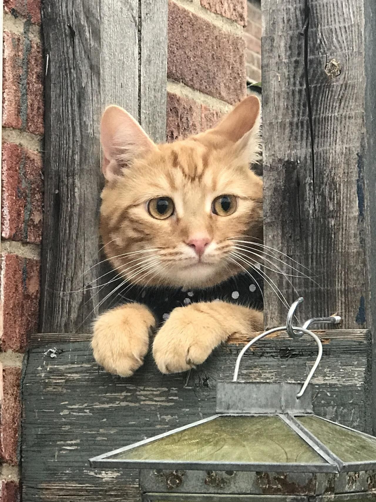 Pin By Autumn Bullock On Animals In 2020 Cats Kitten Meowing Cute Cats