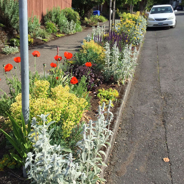 NW Portland drought tolerant parking strip garden by Blue