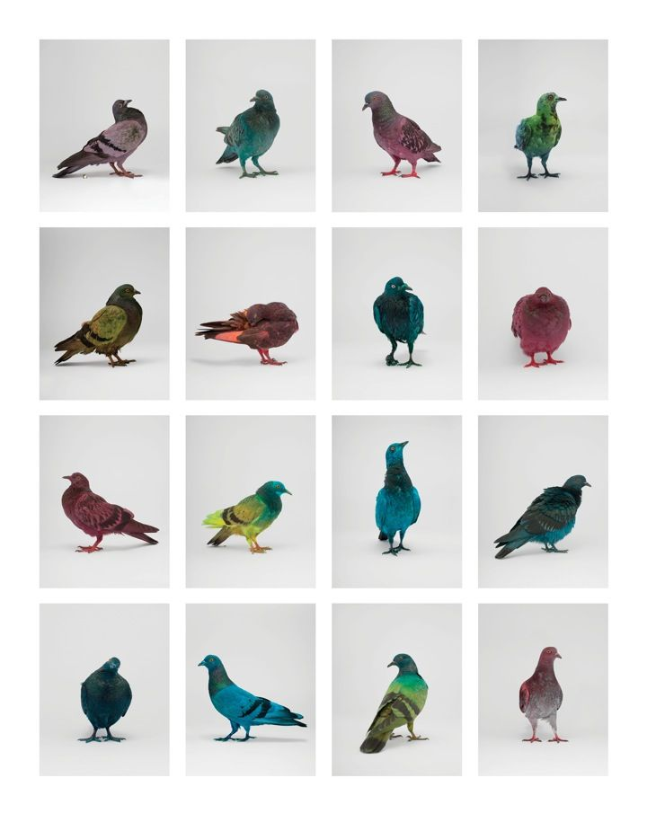 Some Pigeons Are More Equal Than Others Photographie Art Peinture