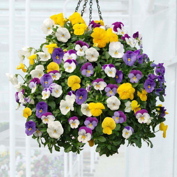 Las mejores plantas para cestas colgantes Cestas colgantes, Cestas