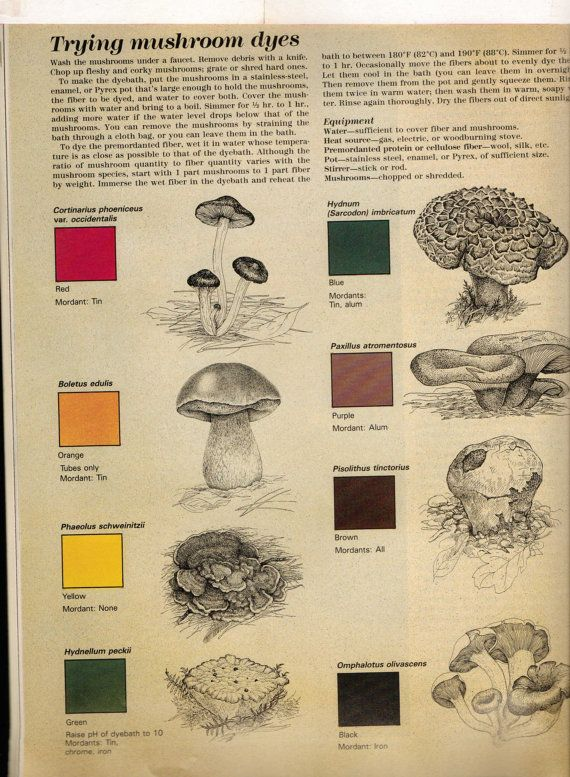 Mushrooms as dyes