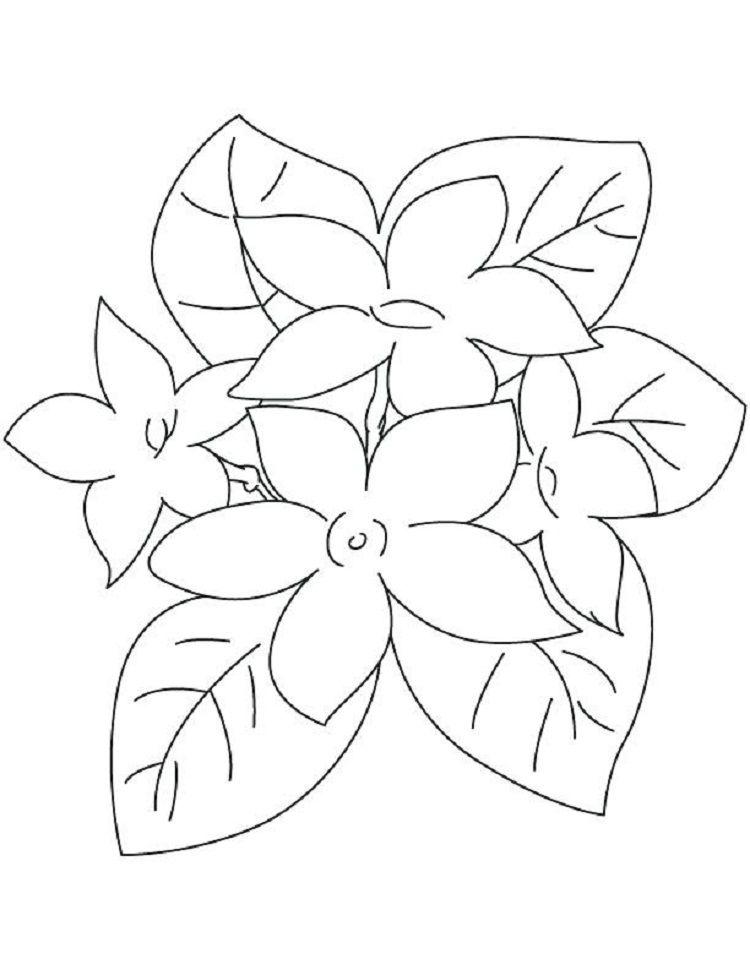 Jasmine Flower Coloring Pages Lukisan Bunga Lukisan Sketsa