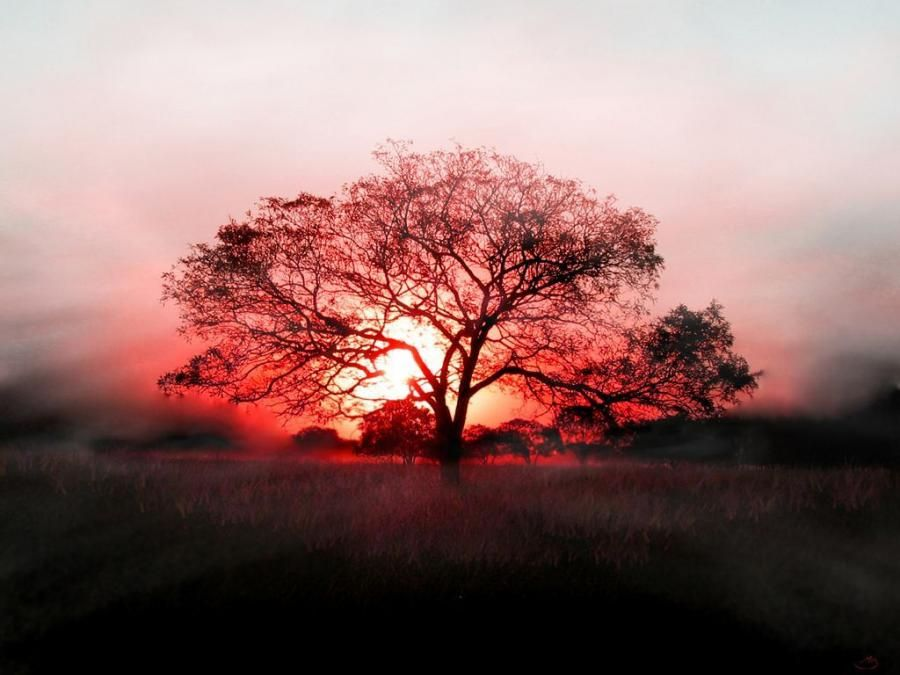Sunset Behide the lonely tree - Pixdaus