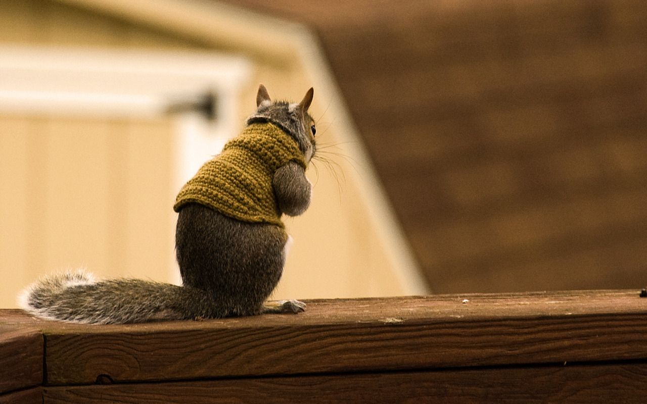 Squirrel Sweaters Folderol Pinterest Squirrel Animal And Cat - Squirrel photographed in heroic pose becomes star of hilarious photoshop battle