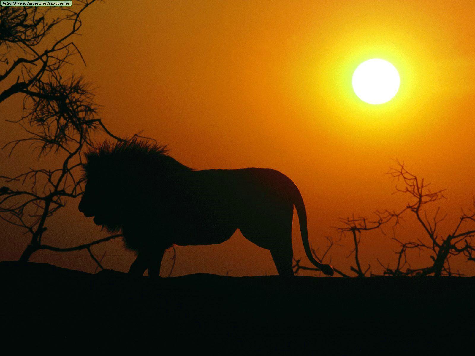 Paisajes Del Mundo Paisajes De Africa Paisajes De Africa Fotos De León Leon Fondo De Pantalla