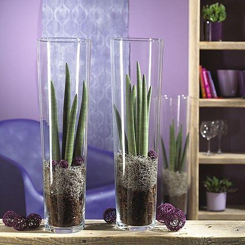 sansevieria in tall vases PLANT Pinterest - decorar jarrones altos