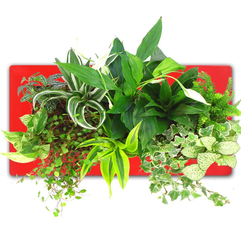 Du Vert Au Mur Tableau Vegetal Cadre Vegetal Plants Garden Landscaping Herbs