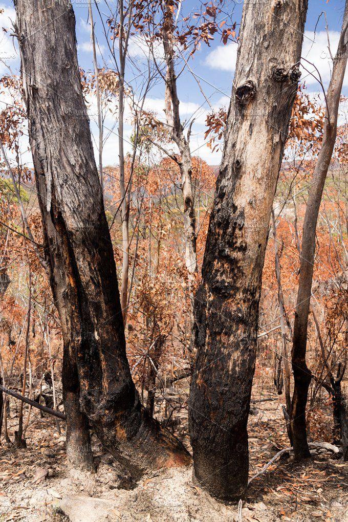 Fire damage in Australia bush Fire damage, Fire, Fire art