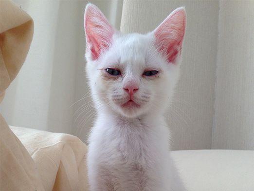 セツという猫4「残念なイケメン猫 揺るぎなきセツSTYLE」