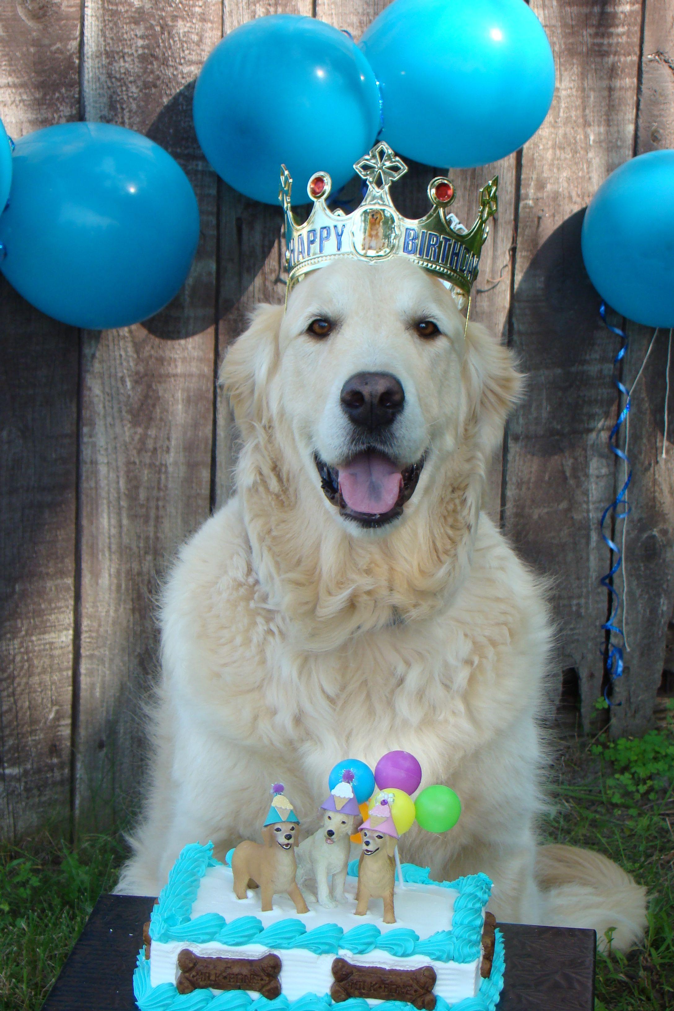 Happy 4th Birthday Bentley Sandy Lindsay Dog Birthday Dog