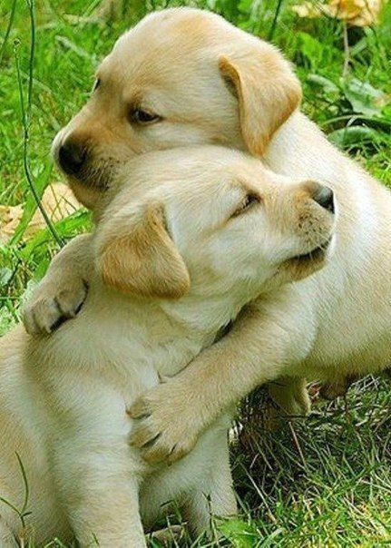 You Re The Best Brother Ever Puppies Baby Dogs Puppy Hug