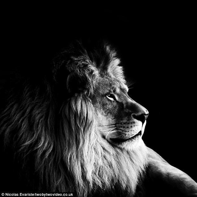 Take a walk on the dark side: Intriguing black-and-white photos of animals shot using only natural light