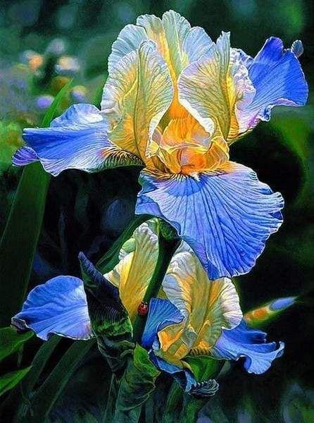 5d Diamond Painting Blue And Yellow Iris Kit In 2020 Iris Flowers Iris Painting Flower Painting