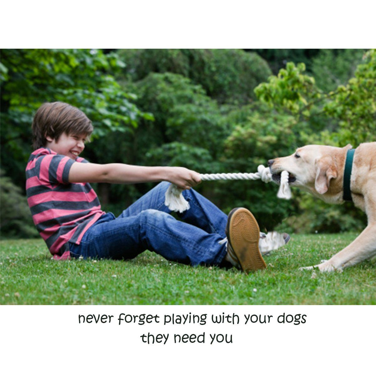 Buibiiu Dog Rope Toys Dog Teething Toys Best Chew Toys For Teething Puppy 12 Pcs Gift Set Toys Teething Rope Bu Rope Dog Toys Rope Dog Dog Teething Toys