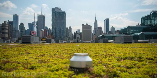 There S A Giant Green Roof Hidden Above Nyc S Biggest Convention Center Green Roof Big Garden Sky Garden