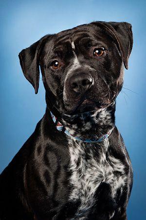 Adopt Panzer On Dog Adoption I Love Dogs Pet Adoption