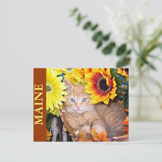 Ginger Kitten in Fall Autumn Basket, Thanksgiving Holiday Postcard | Zazzle.com