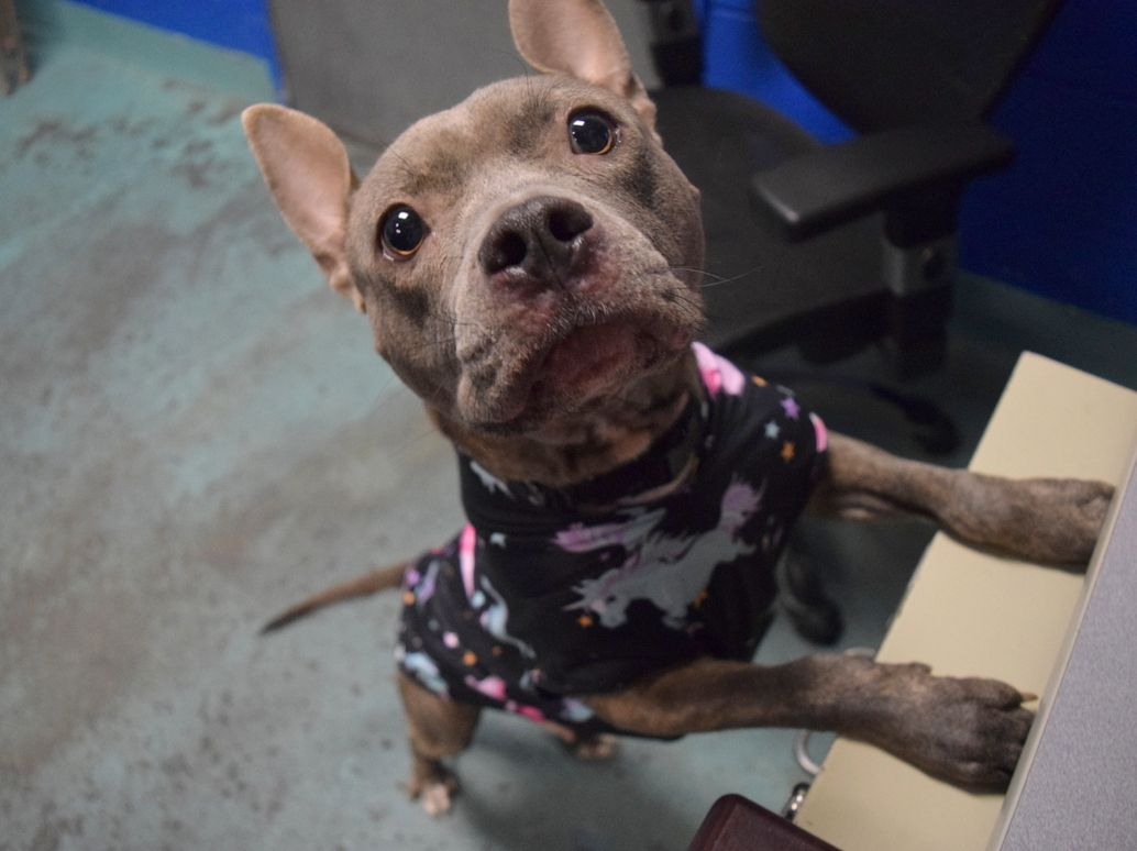 Sassy Id 52826 Brooklyn Animal Care Center Age 2 Years Old