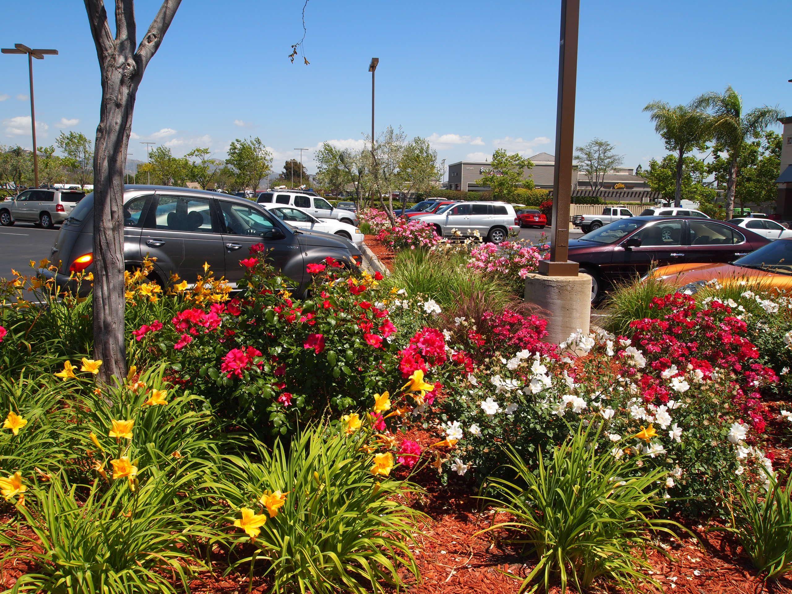 desert landscaping ideas water-wise
