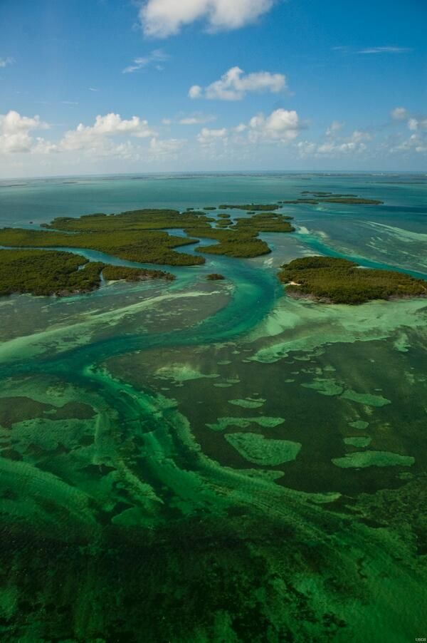 Mangrove islands in Key West, Florida provide valuable habitat for nesting birds and sea turtles