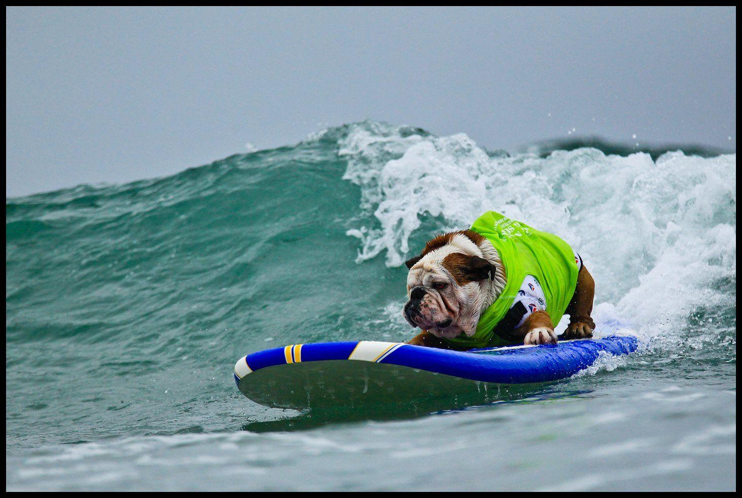 Famed Skateboarding Bulldog Tillman Has Passed Away Adventure Sports Network Bulldog Names California Dog English Bulldog
