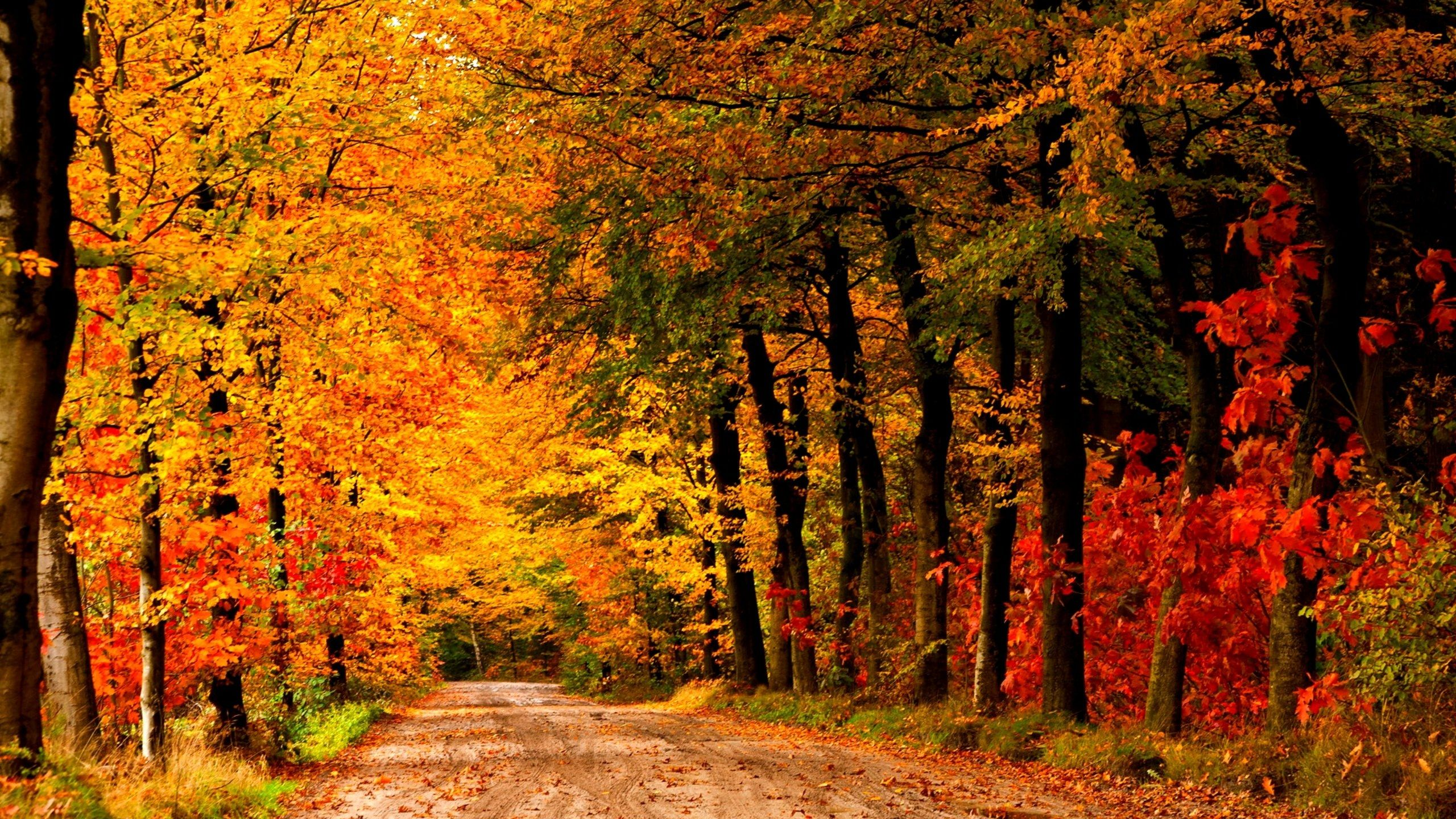 Country Road Autumn wallpaper in 2560x1440 resolution #autumnwallpaper