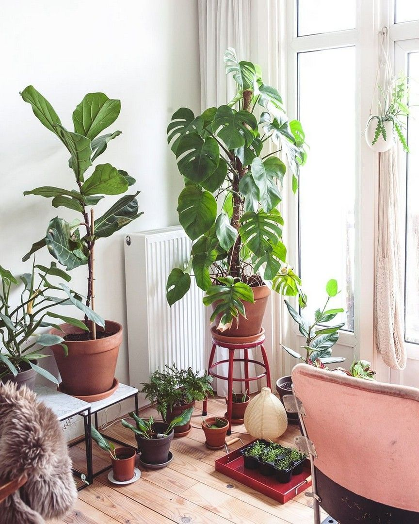 Lovely 20 Cottage Style Landscaping Ideas To Enhance Your: 19 Houseplants That Can Survive Urban Apartments