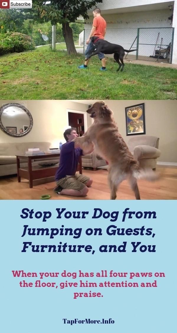 Stop Dog Jumping And How To Teach Dog Not To Jump Check Pin For