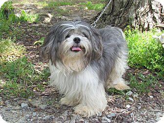 Bedminster Nj Shih Tzu Meet Leo A Dog For Adoption Http Www Adoptapet Com Pet 12930384 Bedminster New Jersey Shih Tzu Dog Adoption Shih Tzu Pets