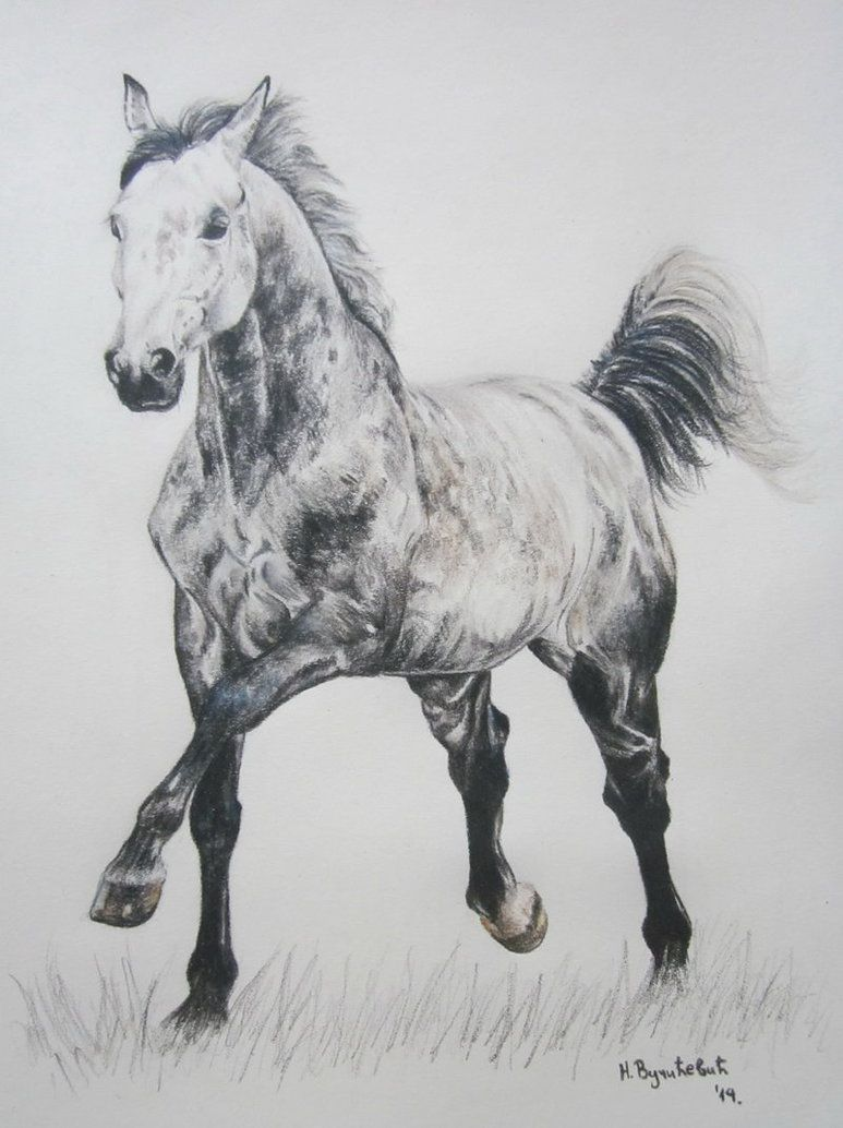 Full Body Horse Drawing : horse, drawing, Young, Lipizzaner, FluffyInu, Horse, Drawings,, Drawing,, Drawing