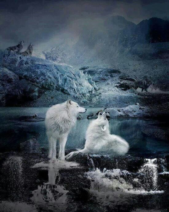 Wolves:  #Wolves.                                                       …
