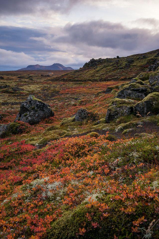 Berserk Lava Field, Iceland