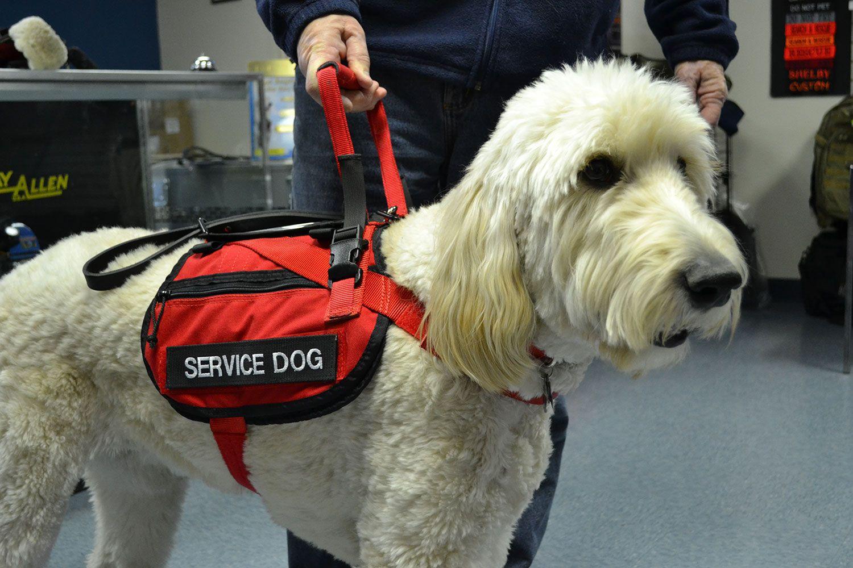 Service Animal Update