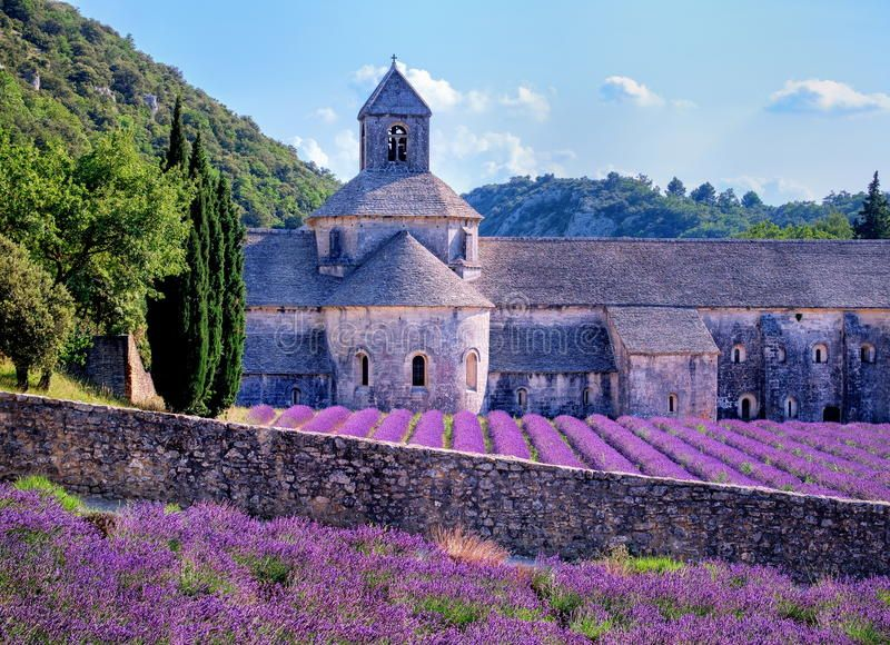 Lavender Fields Provence France Lavender Fields At Senanque
