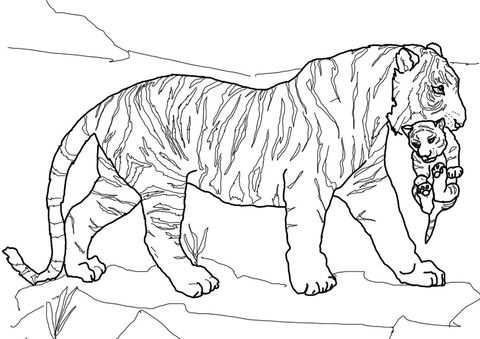 Mother Tiger Carrying Cub coloring page from Tigers category. Select ...