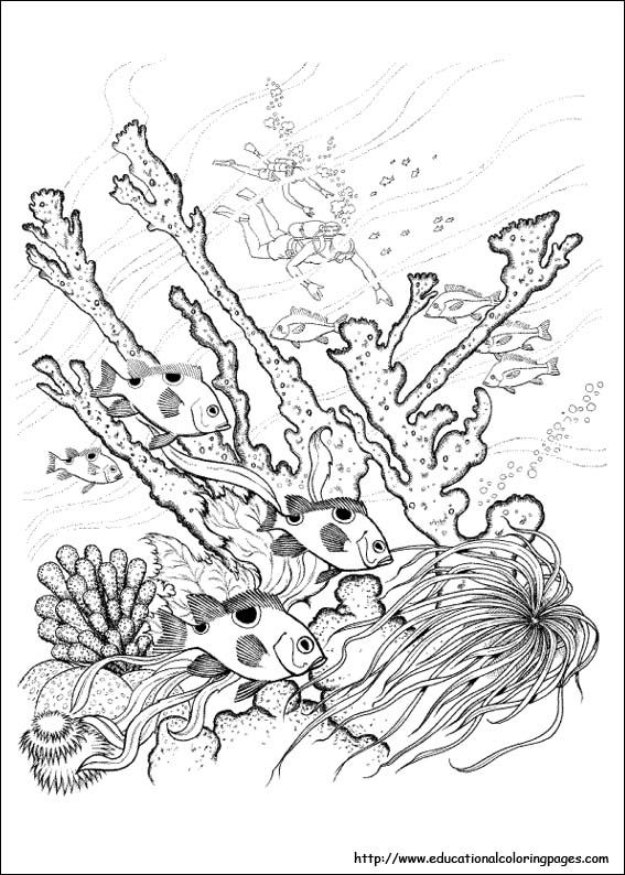 Free Difficult Coloring Pages   educationalcoloringpag...Nature ...
