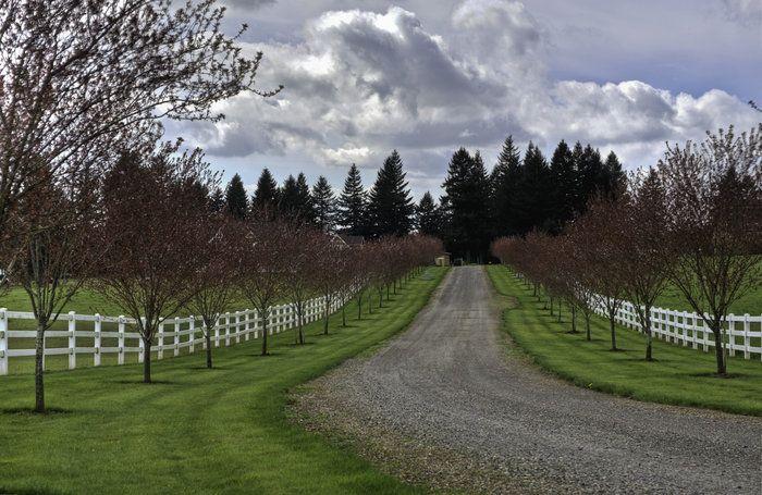 tree lined driveways | Driveways and entrances - www.myLusciousLife.com - treelined driveway4 ...