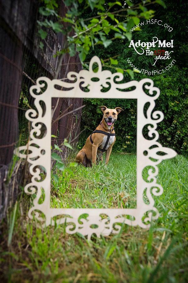 Adopt Me Jasmine The Terrier American Staffordshire Mix Dog Adoption Adoption Humane Society