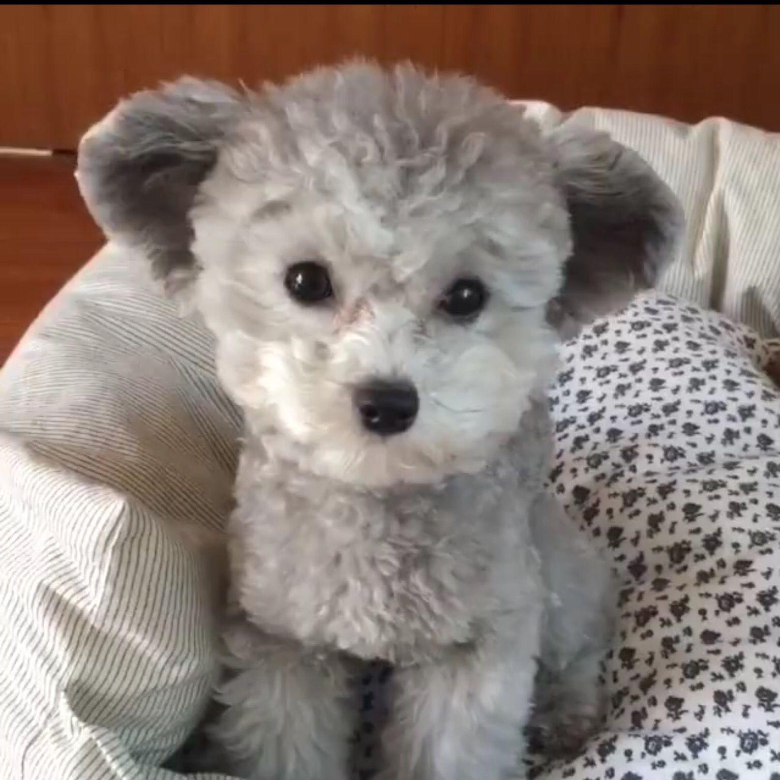 """Teddy"" :)"