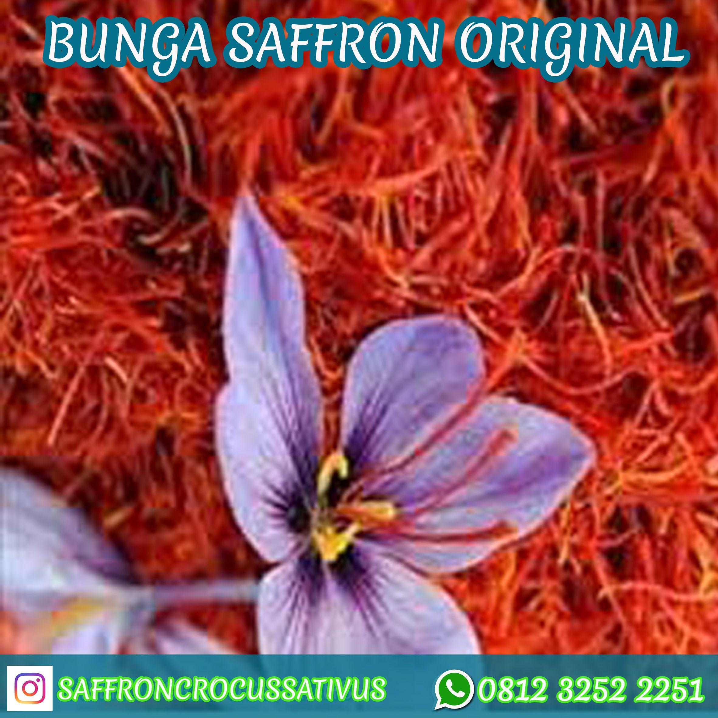 Pin Di Jual Bunga Saffron
