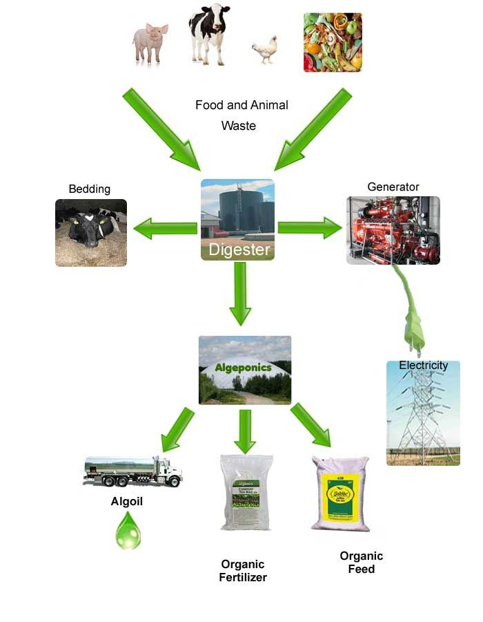 From Organic Waste To Clean Energy And Fine Chemicals Algepower S Algeponics System Uses Waste From Anaerobic Digestion Green Manufacturing Renewable Energy