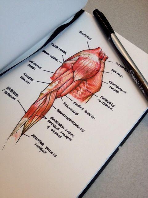 Apuntes   •work work work•   Pinterest   Apuntes, Medicina y Anatomía