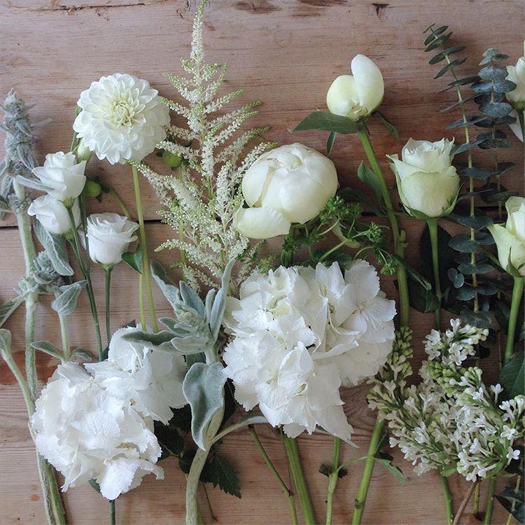 Hvide blomster. Kombinationer som passer til eucalyptus