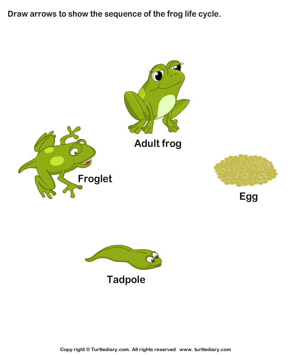 Sequence the Stages of Frog Life Cycle   kikker   Pinterest   Frog ...
