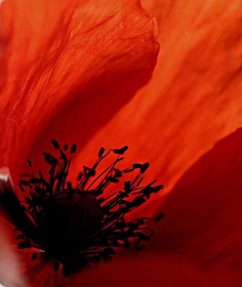 Fleurs  by Benslimane  Lotfi  on 500px