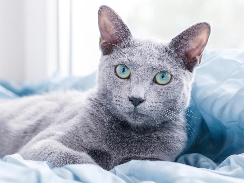 45 Cat Breeds With the Friendliest Personalities (With