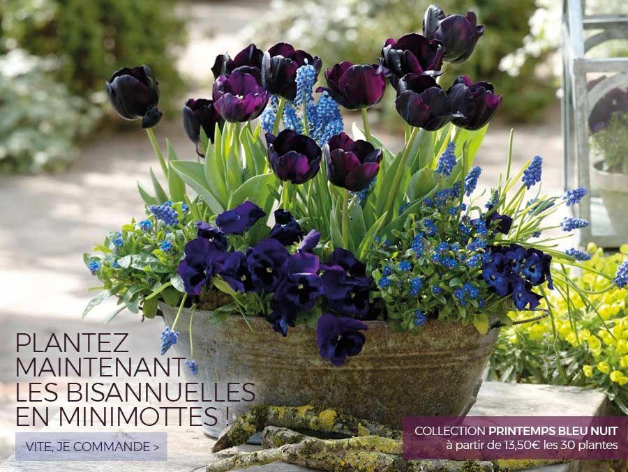 Promesse de fleurs, plantes pour le jardin : vivaces, arbustes ...