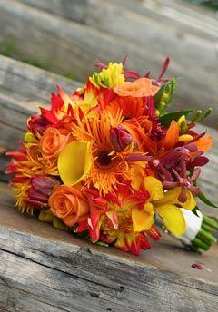Fleur De Liz - Colorado