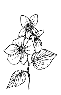 How To Draw A Violet Flower : violet, flower, Violet, Flower, Drawings, Drawing, Colored, Drawings,, Tattoos,