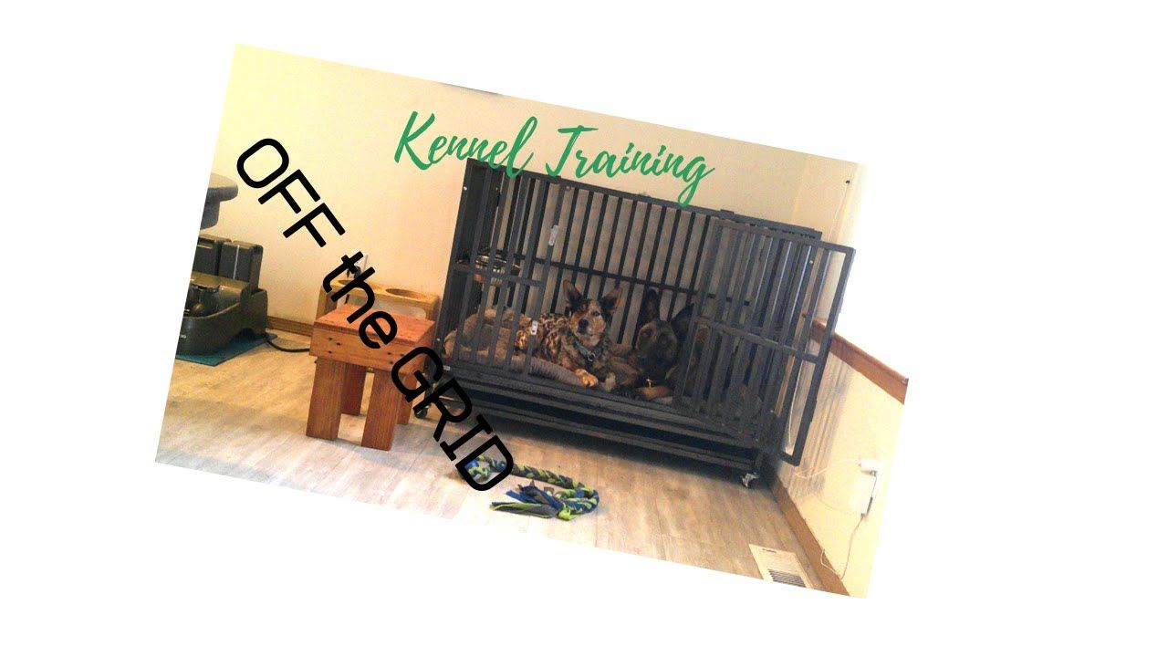 My Video in 2020 Princess dog, Your dog, Kennel